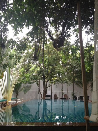 Circa 51:                   Pool view from double lounge under the banyan tree. Also view from Room 3.