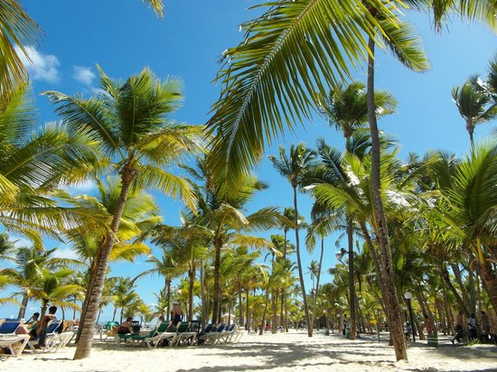 أر أي يو بالاس بونتا كانا - أول إنكلوسف:                                                       Pas de parasols, que de magnifiques palmie