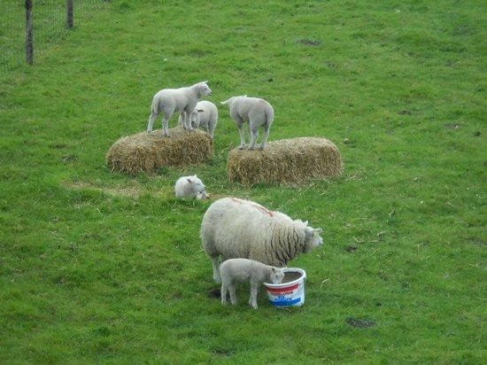 Op de Horsten:                   Gli abitanti del prato