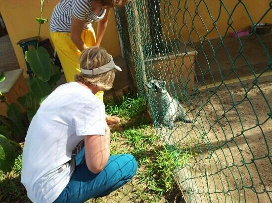 Beachfront Hotel La Palapa: animal sanctuary little racoon