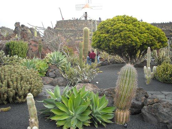 Jardin de cactus picture of jardin de cactus guatiza for Jardines con cactus