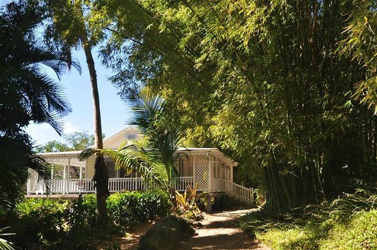 Banyan Tree Bed and Breakfast:                   Bamboo and Mt.Nevis