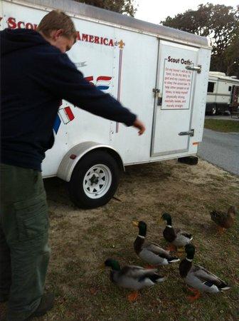 St. Augustine Beach KOA:                   Feeding Ducks