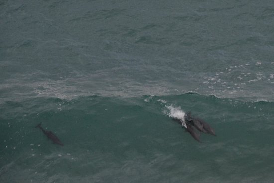 Arriba de la Roca: Dolphins riding the wave