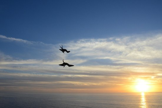 Arriba de la Roca: Birds at Sunset