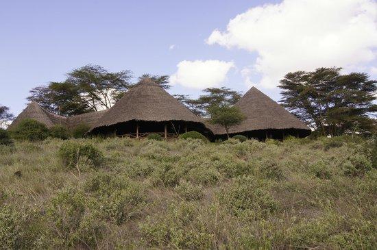 Tortilis Camp:                   Widok na restaurację od stroy namiotów