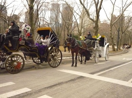 Empire Hotel:                   Traffic Jam Central Park
