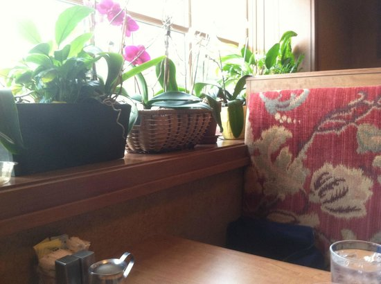 Jumps: orchid pots on the sill