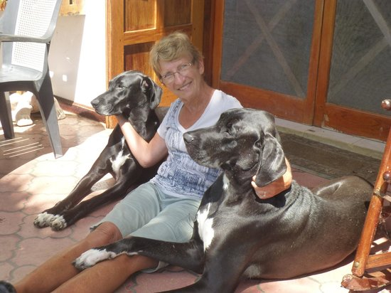 Chalet Nicholas: 2 of the 3 friendly Great Danes