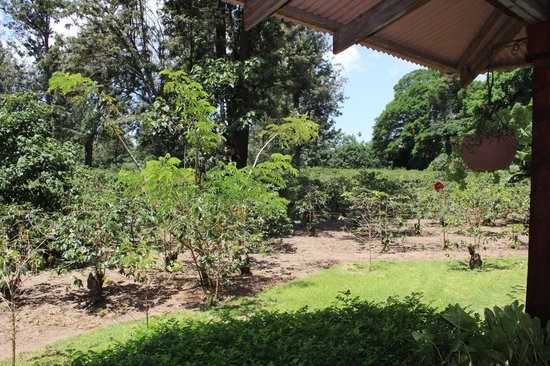 Arusha Coffee Lodge:                   Plantation from suite