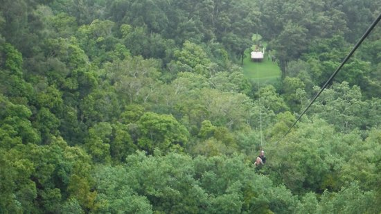 Big Island Eco Adventures II Zipline Canopy Tour:                   Zip # ?