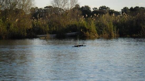 Elephant Hills Resort:                   Hippos sighted on the sunset cruise