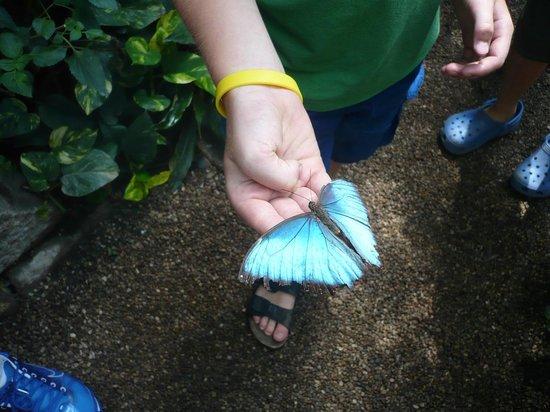 Butterfly House Elbauenpark:                   Kelebek 2