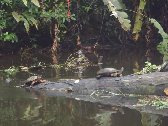Pachira Lodge:                   Animales en los canales