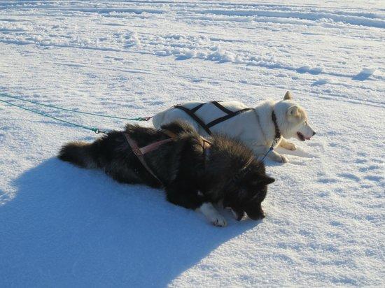 Eskimos Iceland:                   Rest time!