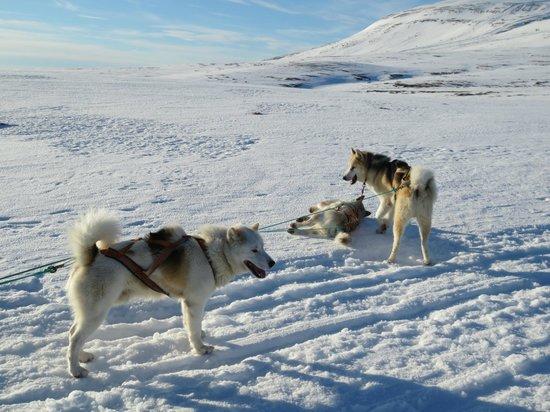 Eskimos Iceland:                   Having a rest half way through the ride!