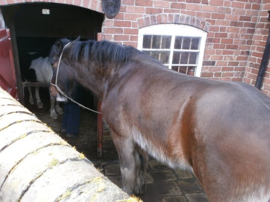 Blists Hill Victorian Town:                   Oliver, the carthorse