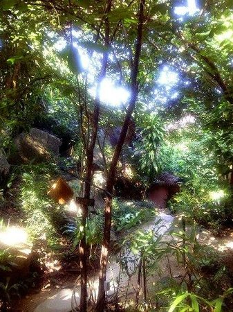 The Sanctuary Thailand :                   Pathway to Garden House -- magical!
