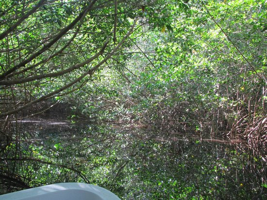 Laguna Ventanilla : manglar