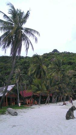 Delight Resort:                   Beach front