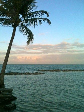 The Smuggler's Den:                   Palm Trees