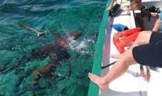 Blackhawk Sailing -  Tours:                   sharks off the boat - yes we snorkeled with them ! awesome