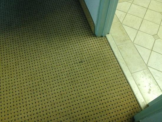 Best Western Atlantic Beach Resort: stain on the broken carpet