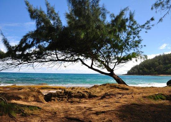 Kauai Photo Tours:                   Make sure you have a polarizer to accentuate the super blue sky & surf!