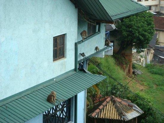 Hotel Amanda Hills: Monkeys outside the room