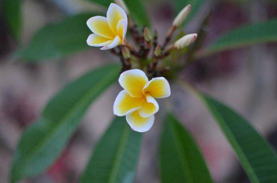 Le Meridien Ile Maurice: Great Frangipani Garden
