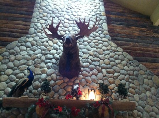 Wild Canyon Cafe Reviews