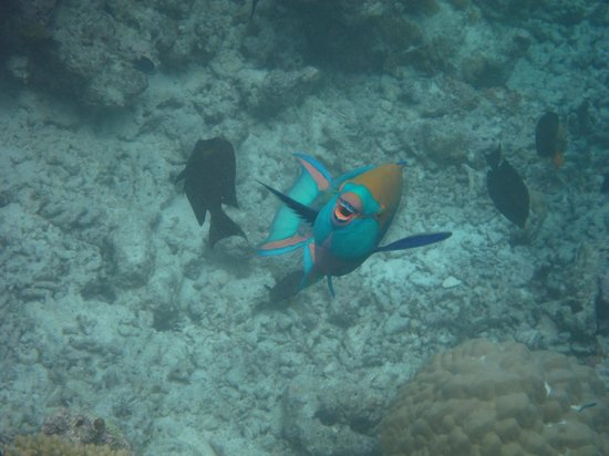 Anantara Veli Maldives Resort:                   underwater fish smiling at us while snorkeling!