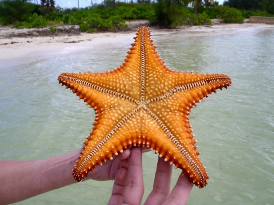Seven Seas Charters Day Tours Starfish Beach