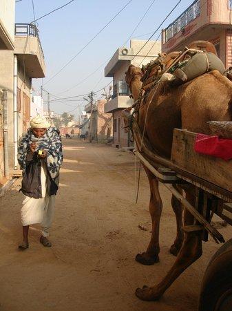 Rajesh Jangid Tourist Pension:                   Camel cart ride