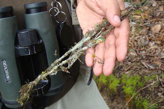 San Jorge Eco-Lodge & Botanical Reserve:                   Tiny orchids