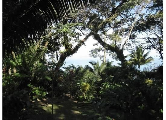 Copa de Arbol Beach and Rainforest Resort:                   View from Room