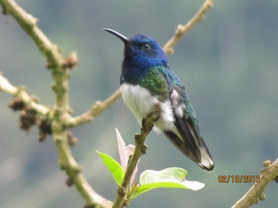 San Jorge Eco-Lodge & Botanical Reserve:                   Hummingbird heaven at San Jorge Tandayapa
