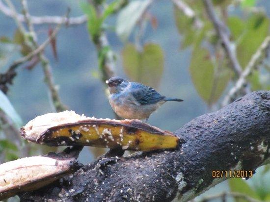 San Jorge Eco-Lodge & Botanical Reserve:                   San Jorge Tandayapa