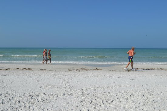 Beach Club at Siesta Key:                   Exelente playa y hotel