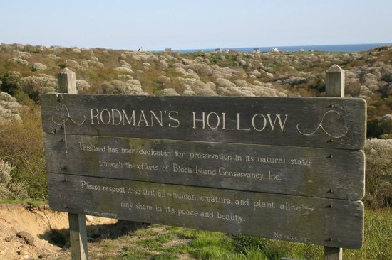 Rodman's Hollow