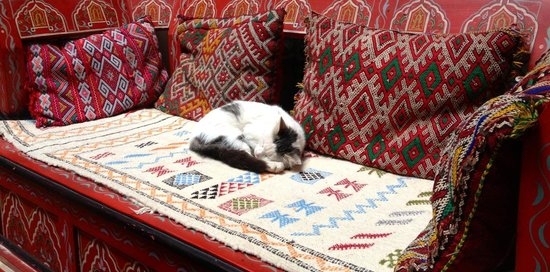 Riad Tamarrakecht :                                     Friendly riad's cat