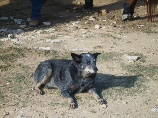 Dixie Dude Ranch :                   Katie the amazingly clever talking dog