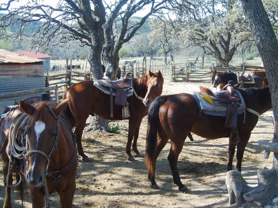 Dixie Dude Ranch :                   Horses ready for off
