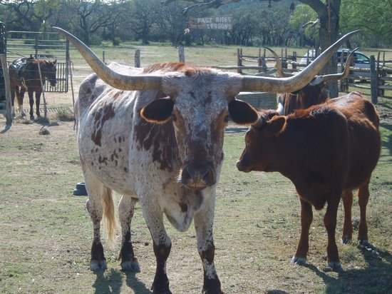 Dixie Dude Ranch:                   Some of the residents