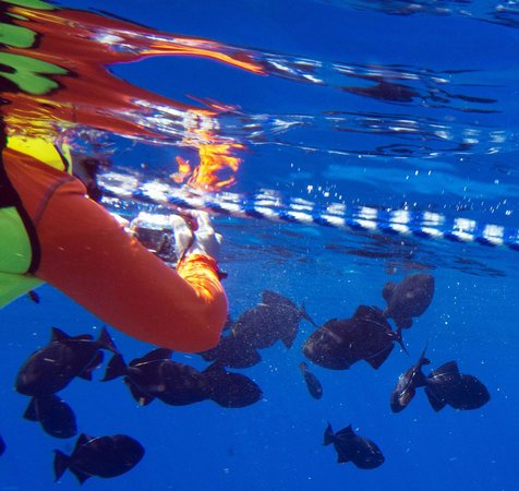 LemonTree Oceanfront Cottages:                   Snorkeling off Desecheo