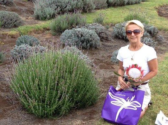 Ali'i Kula Lavender Farm: Enjoying the lavender