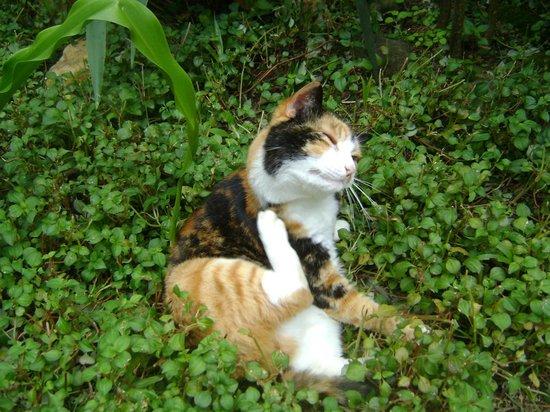 Pousada Tropicana:                   Gatinho no jardim da pousada