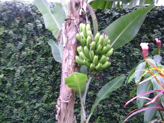 Pousada Tropicana:                   Detalhe do jardim da pousada