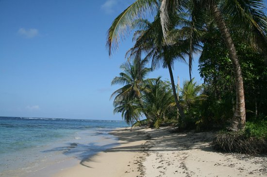 Red Frog Beach Island Resort & Spa:                   Playa Larga - 30 minute hike NE from Red Frog Beach
