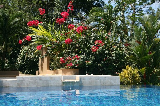 Red Frog Beach Island Resort & Spa:                   Typical infinity pool and beautiful landscaping at our villa